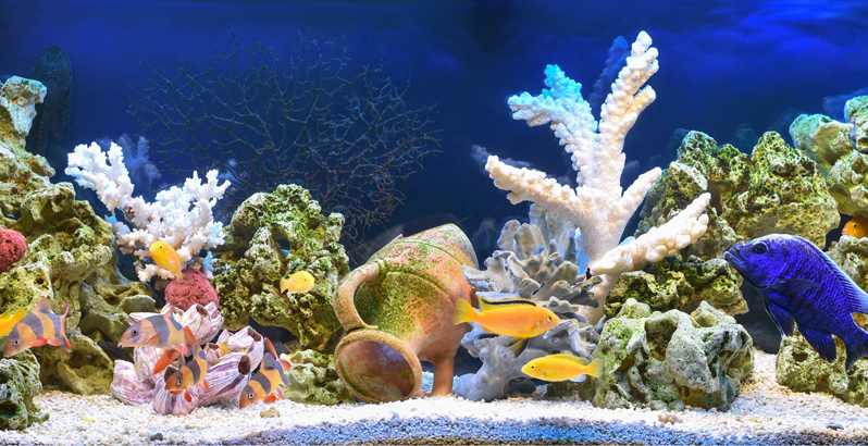 Come illuminare un acquario con i Led - 1